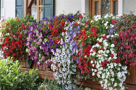 Blumen Pflanzen Balkon Juni