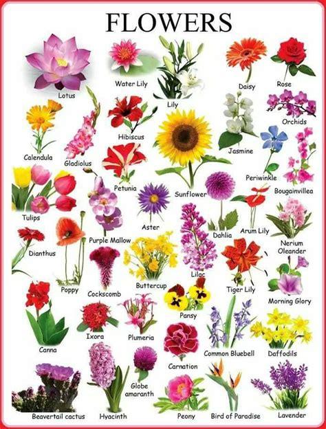Blumen Pflanzen Englisch
