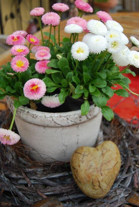 Blumen Pflanzen Facebook