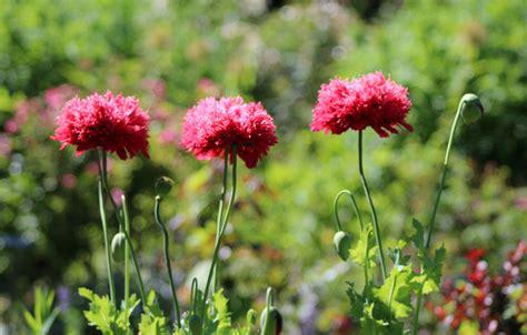 Blumen Pflanzen Juni