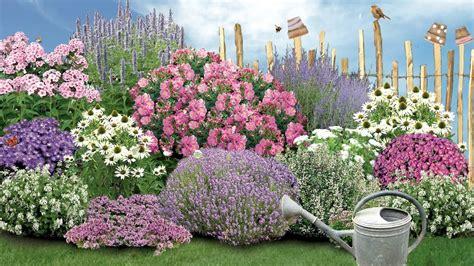 Blumen Pflanzen Youtube