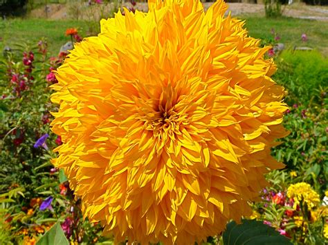 Blumen Und Pflanzen Rogge