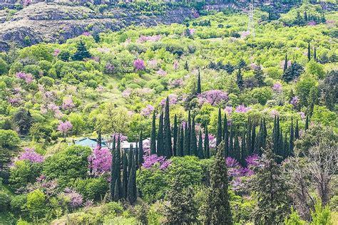 Botanischer Garten Tiflis