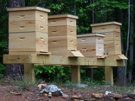 Building A Beehive Stand