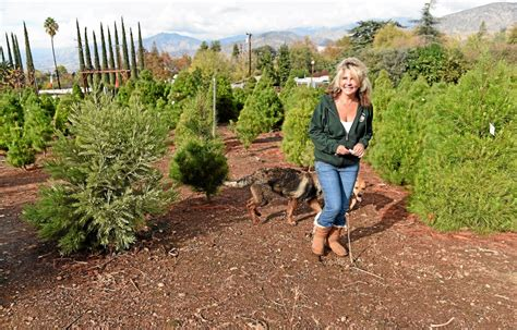Christmas Tree Farms Northern California | Paper Christmas Cards