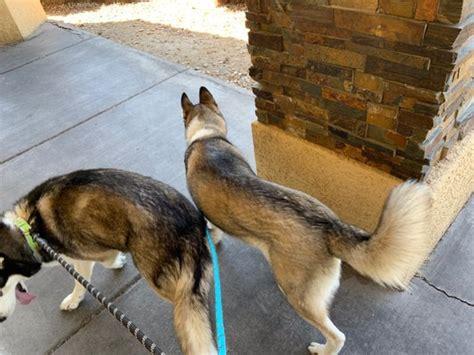 Camino Al Norte Animal Hospital
