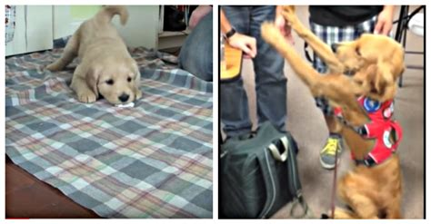 Can Every Dog Be Trained To Be A Service Dog