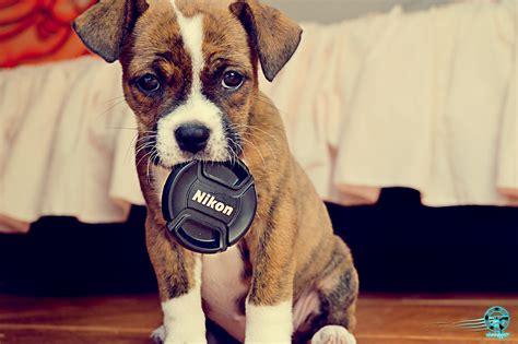 Celeste Dog Training