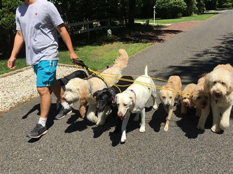Cherry Hill Dog Training