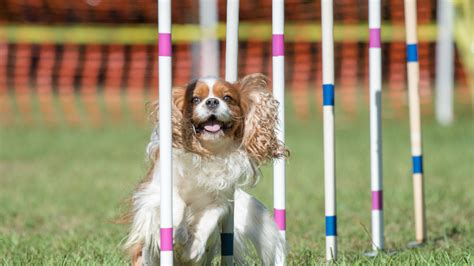 Cool Critters Dog Training Valrico Fl