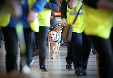 Courses For Guide Dog Training