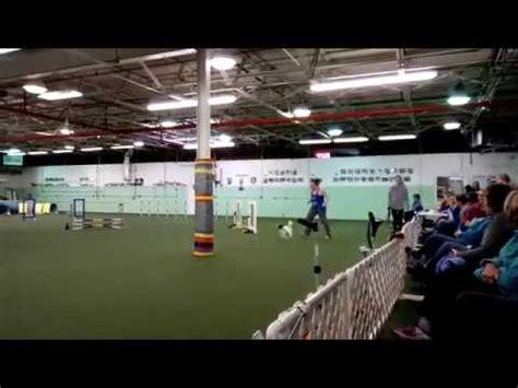 Dayton Dog Training Club