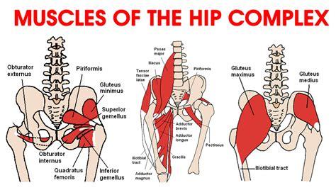 deep hip flexor muscles diagram