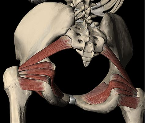 deep hip flexor muscles palpation meaning of names