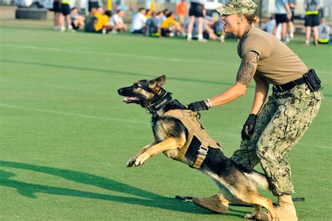 defense military working dogs training school dod mwd