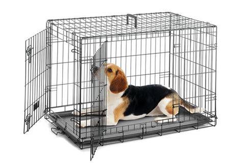 Dens Dog Training