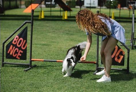 Do As I Do Dog Training