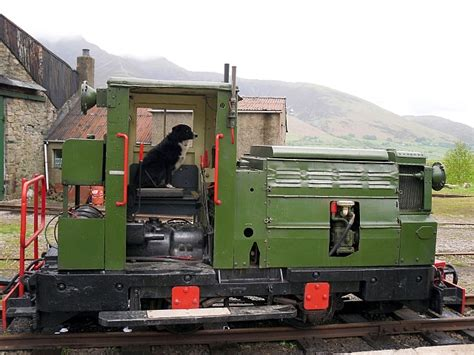 dog driving train