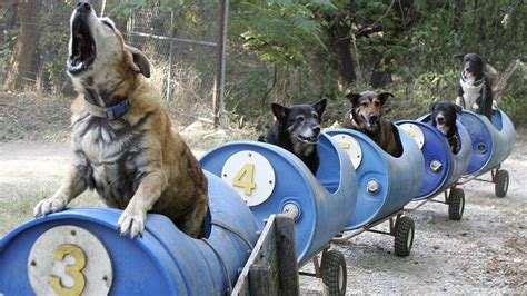 dog train in fort worth