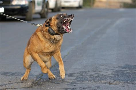 dog training aggression