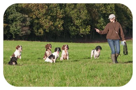 dog training cwmbran