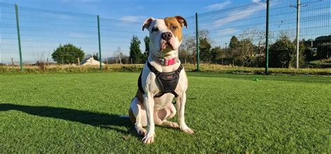 dog training dspca