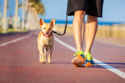 dog walking training liverpool