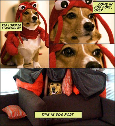 Corgi Lawyer Memes Dog Fort Know Your Meme