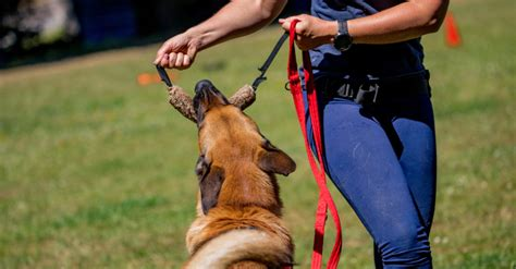 Dog Aggression Obedience Training