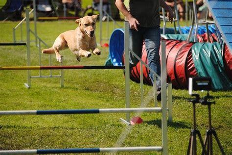 Dog Agility Training Gastonia Nc