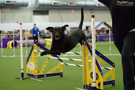 Dog Agility Training Southampton
