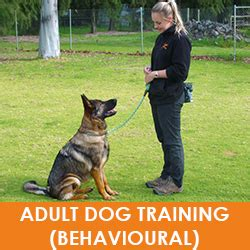 Dog Boarding And Training Perth