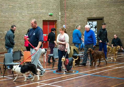 Dog Dog Training Puppy School Glasgow Glasgow