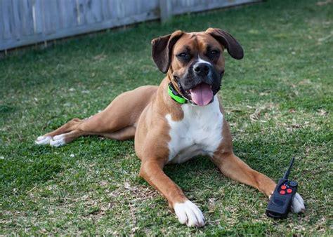 Dog Obedience Training Menifee Ca