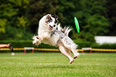 Dog Obedience Training Ooltewah