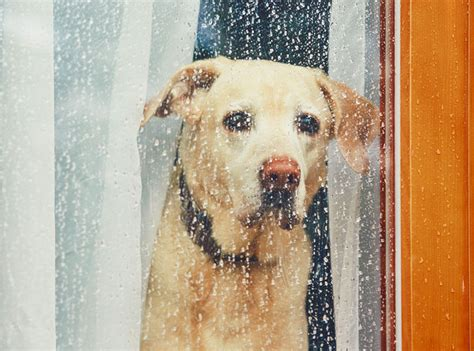 Dog Separation Anxiety Training Chicago