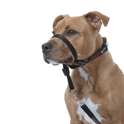 Dog Training Aids To Stop Pulling