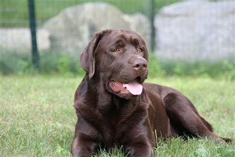 Dog Training Boot Camp Massachusetts