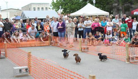 Dog Training Burnet Tx