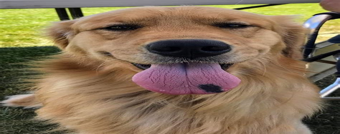 Dog Training Club Of Salinas Valley