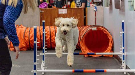 Dog Training Culver City