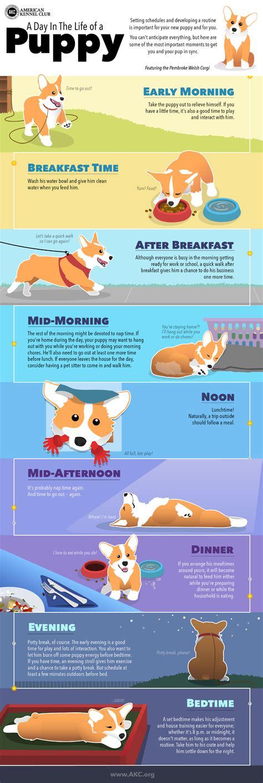 Dog Training Daily Routine