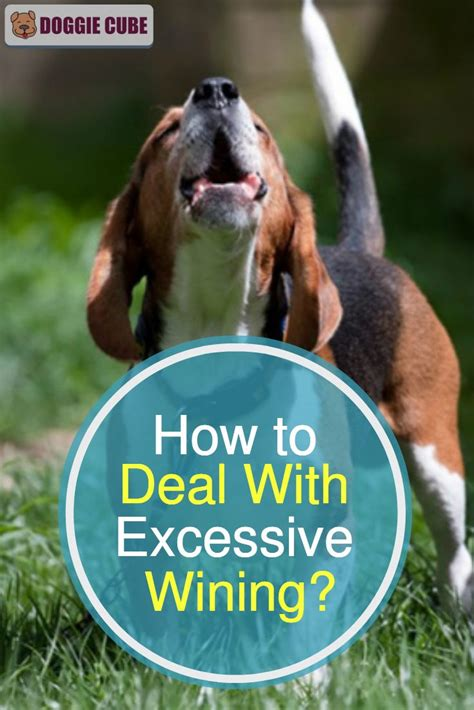 Dog Training Excessive Whining
