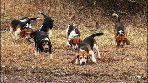 Dog Training For Rabbit Hunting