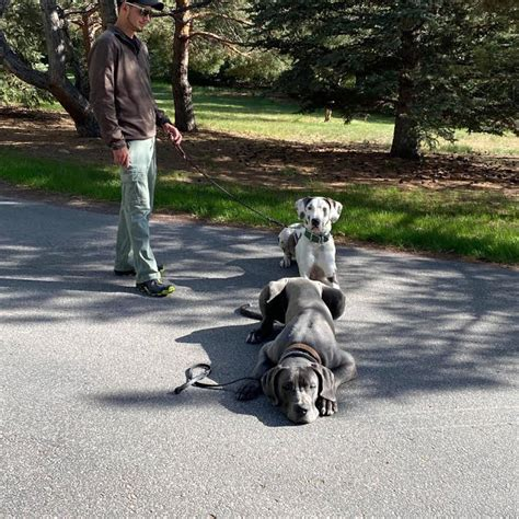 Dog Training Gillette Wyoming