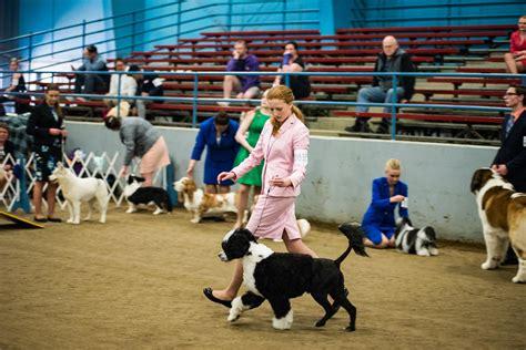 Dog Training In Grays Harbor