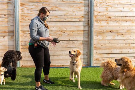 Dog Training In Kansas City