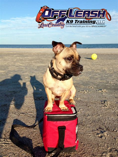 Dog Training In South Carolina