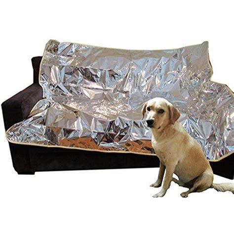 Dog Training Keep Off Furniture