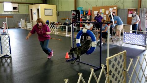 Dog Training Lakewood Colorado